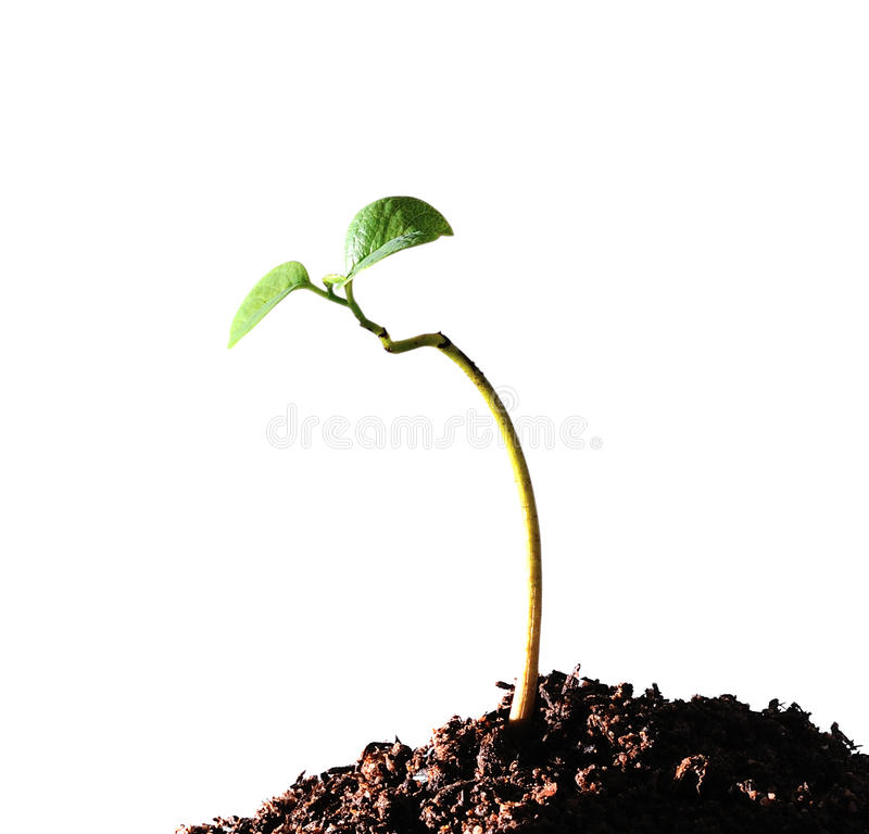 Download Young plant stock image. Image of care, organic, nutrient - 26131837