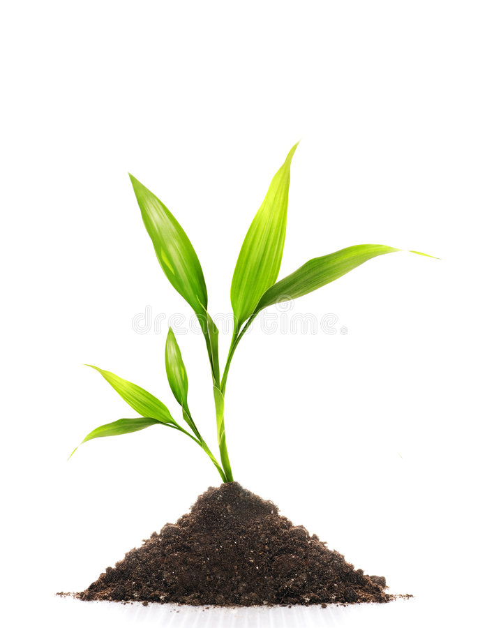 Download Young plant stock image. Image of natural, green, gardening - 4746297