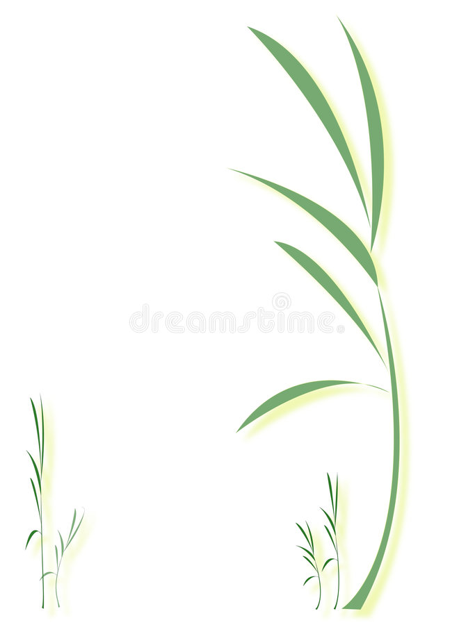 Download Young plant stock vector. Image of bamboo, freshness, biology - 6400224