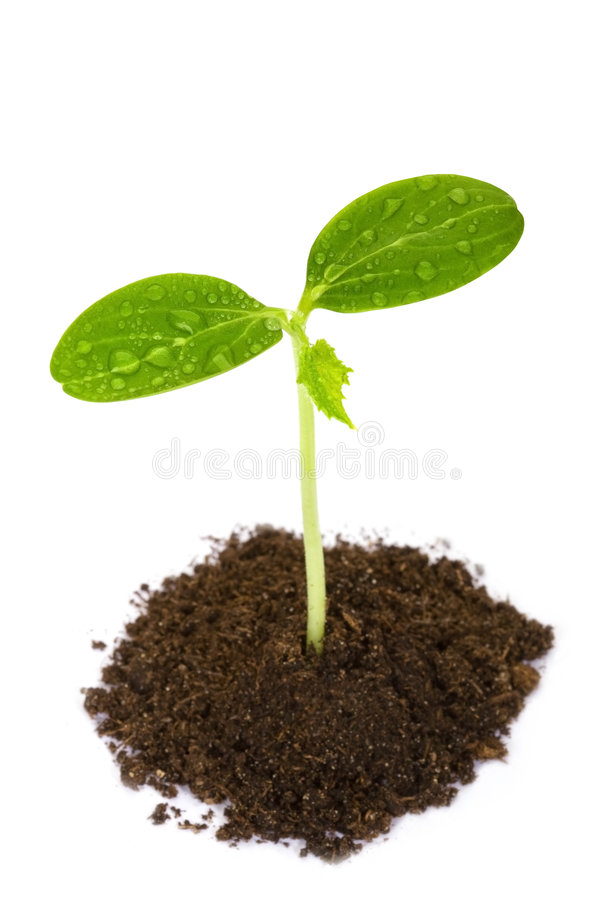 Young plant stock photos