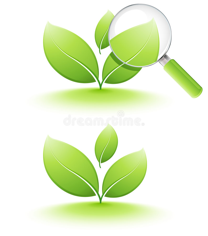 Download Young plant analyzing stock vector. Illustration of ecology - 7399865