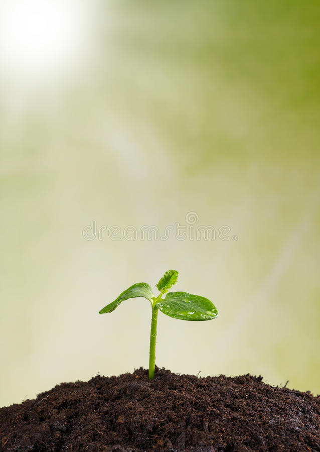 Young plant in earth, concept of new life. Young plant in pile of earth, concept of new life stock images