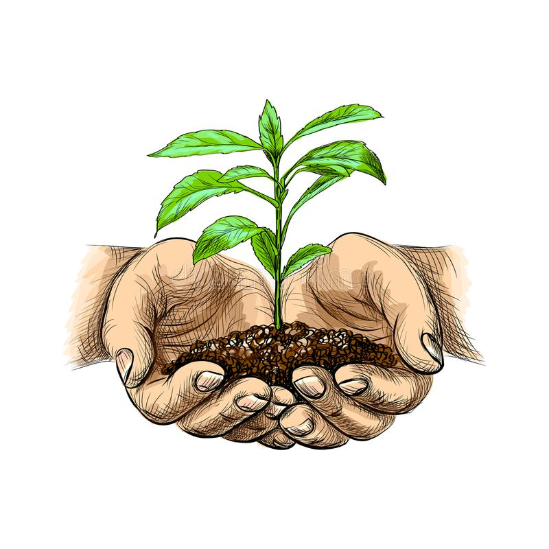 Young plant with ground in hands stock illustration