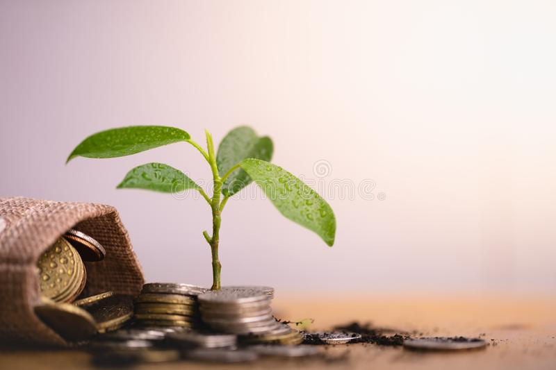 Young plant grow and coins stack. stock photos