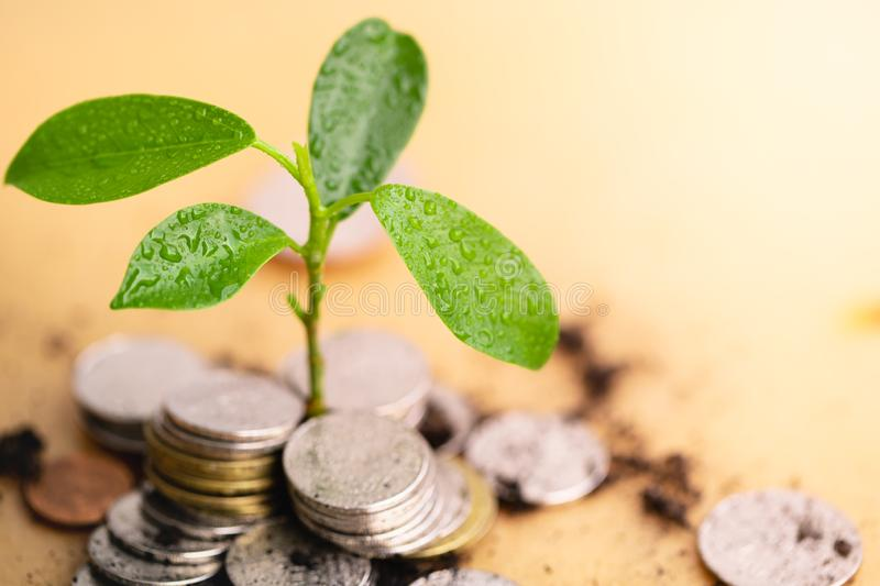 Young plant grow and coins stack. stock images