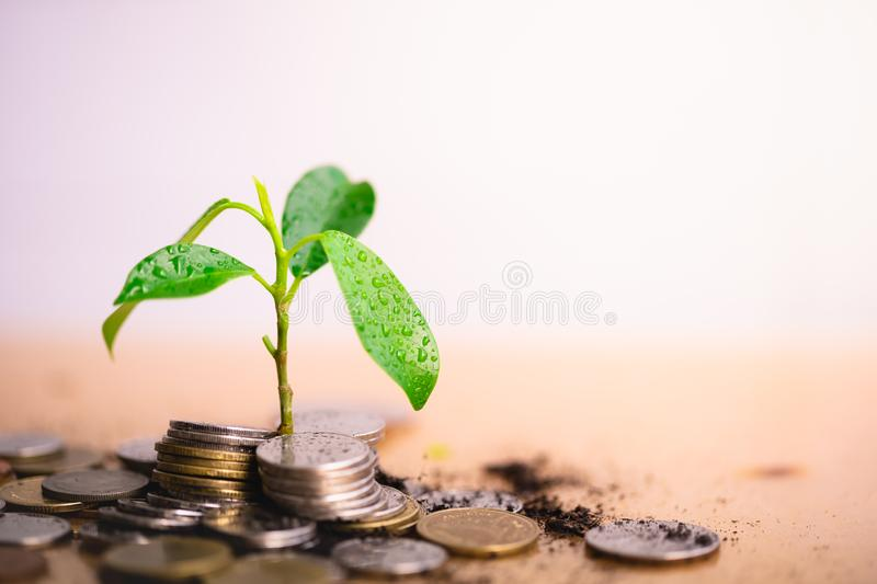 Young plant grow and coins stack. stock photo