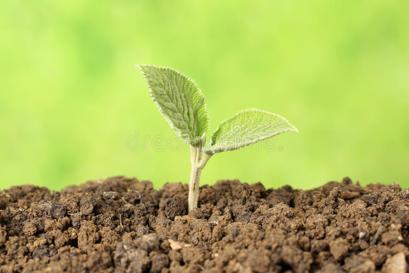 Young plant stock photography