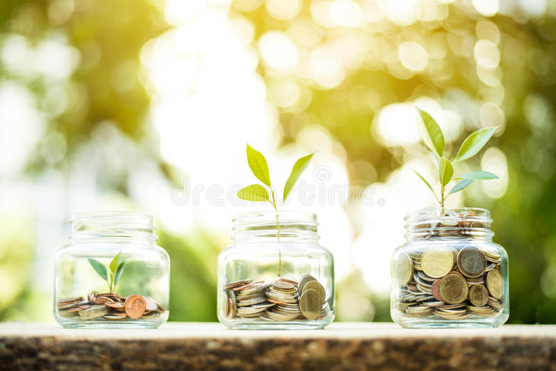 Young plant growing in the glass jars that have money coins stock photography