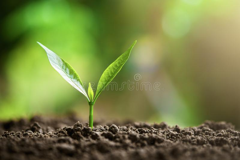young plant growing stock photos