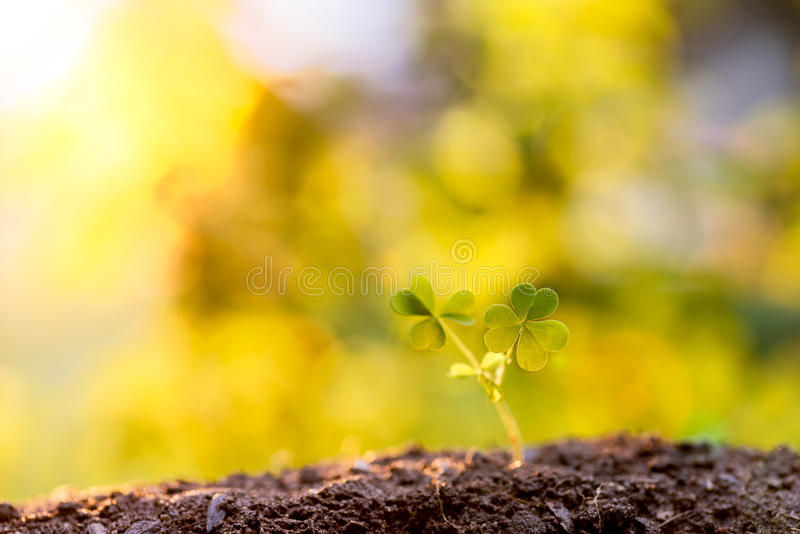 A young plant growing in soil stock photo