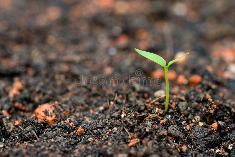 New life concept. Young plant growing in soil, representing new life or beginning concept stock photography