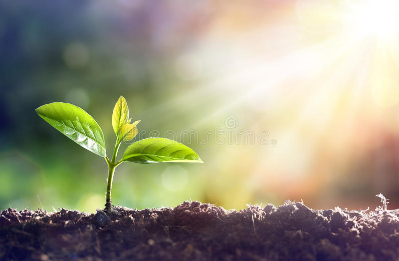 Young Plant Growing royalty free stock photography