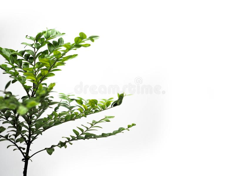 The young plant grows from a fertile soil is isolated on a white background royalty free stock photo