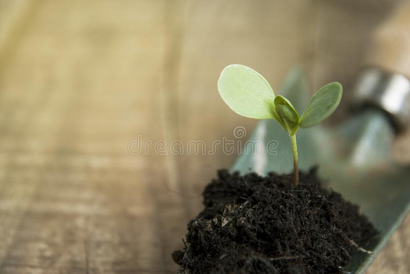 Young Plant Growth in Soil Gardening, Garden Tools. Wooden Background. Rustic Style. Copy space. stock image