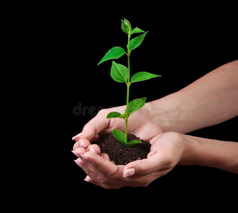 Young plant in hand on black stock photo