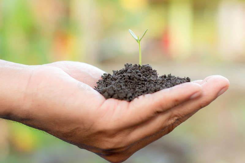 Young plant in hand. Seedling are growing in the soil with sunlight. /Wherever the tree is planted,everyone will benefit from it stock photo
