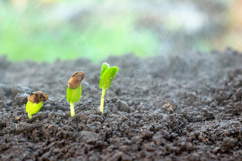 Young plant in hand. Seedling are growing in the soil with sunlight. /Wherever the tree is planted,everyone will benefit from it stock photos