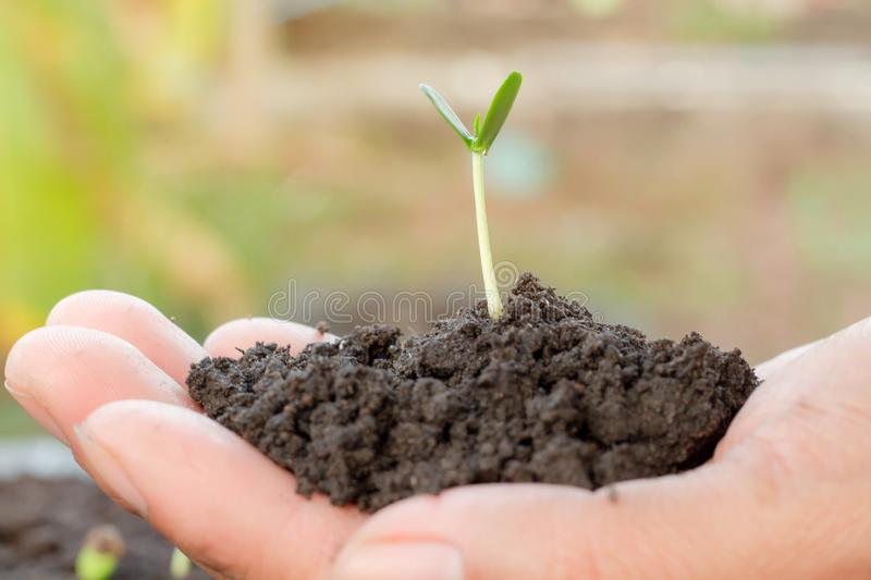 Young plant in hand. Seedling are growing in the soil with sunlight. /Wherever the tree is planted,everyone will benefit from it royalty free stock photos