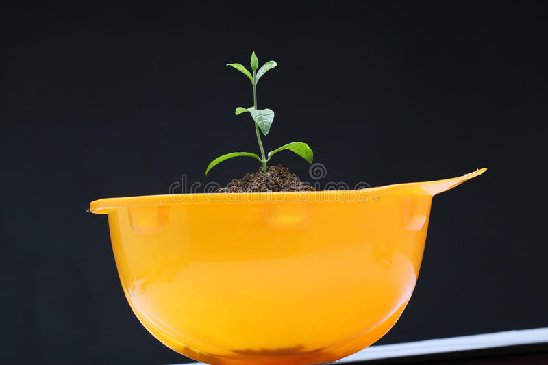 Young plant in hardhat stock photography