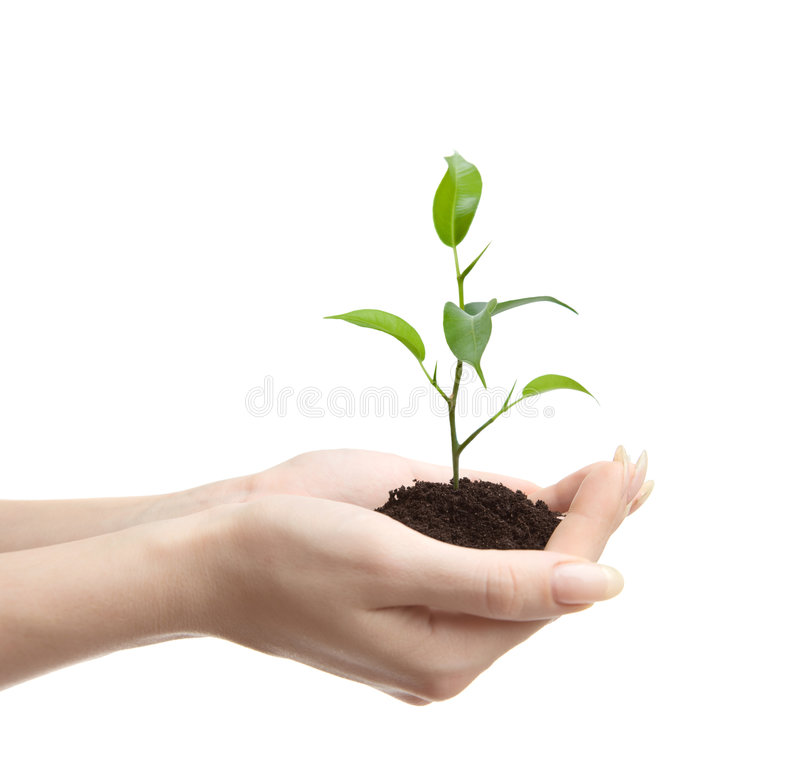 Young plant in human hands. On light background royalty free stock photos