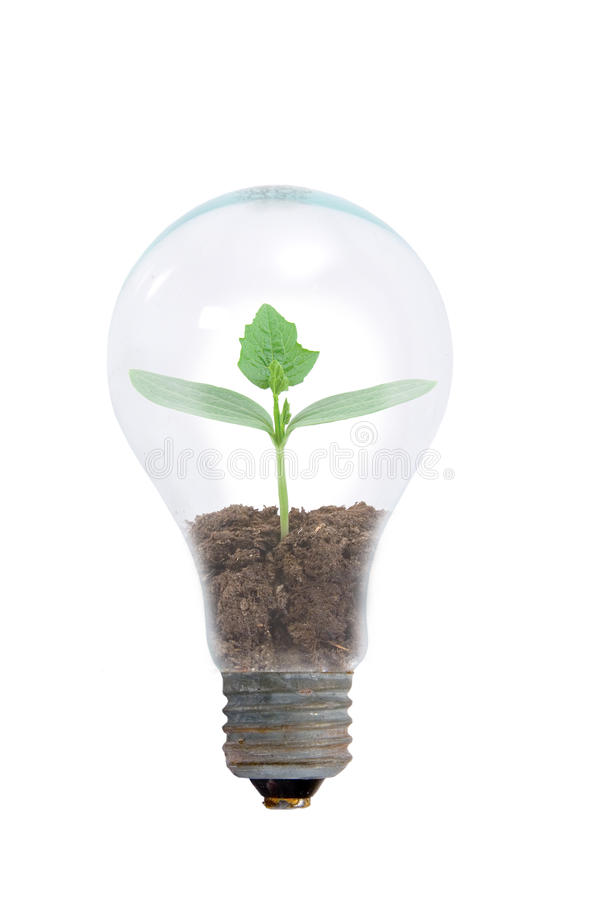Young plant in a light bulb royalty free stock images