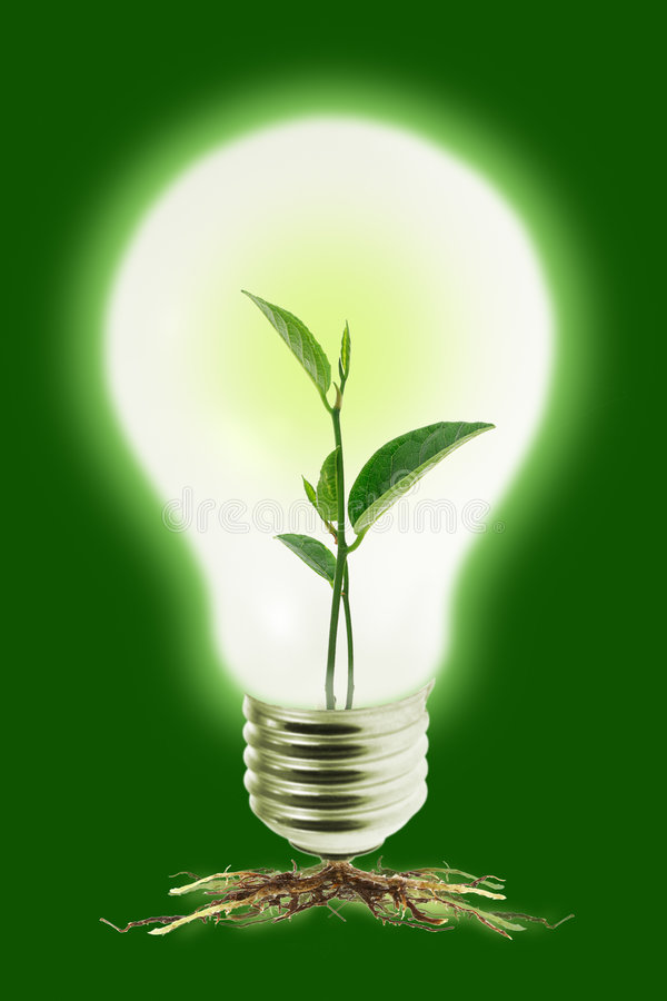 Young plant in light bulb stock photos