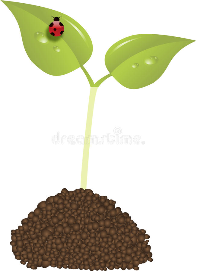 Download Young Plant New Life Concept Vector Stock Illustration - Illustration of concept, fertile: 12163126