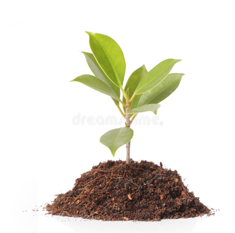 Young plant new life. Green sapling royalty free stock photo