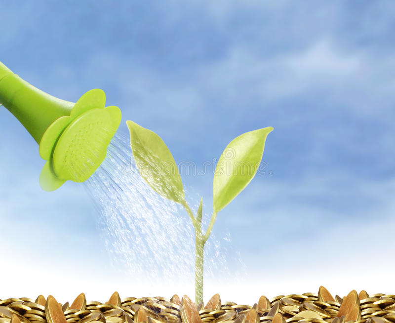 Young plant new life. Green sapling stock images