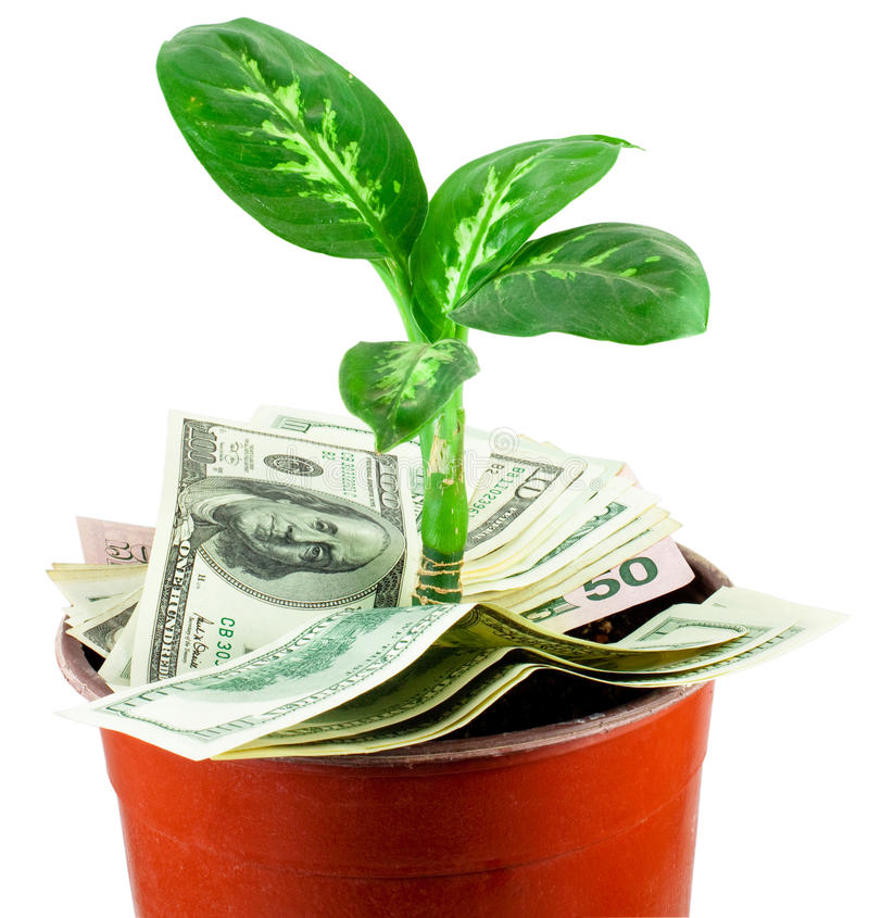 Young Plant Over Dollars Royalty Free Stock Photography