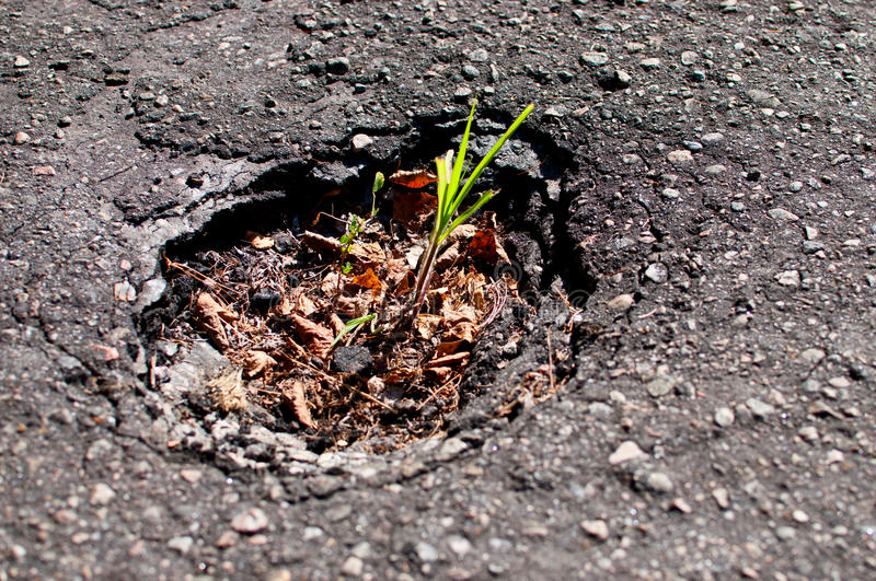 Download Young Plant In The Pavement Royalty Free Stock Images - Image: 25937939