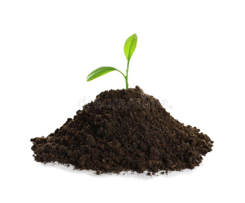 Young plant and pile of fertile soil on white background. Gardening time stock photos