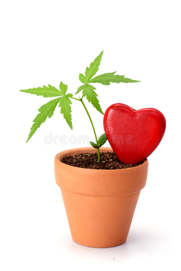 Young plant and red heart shape royalty free stock images