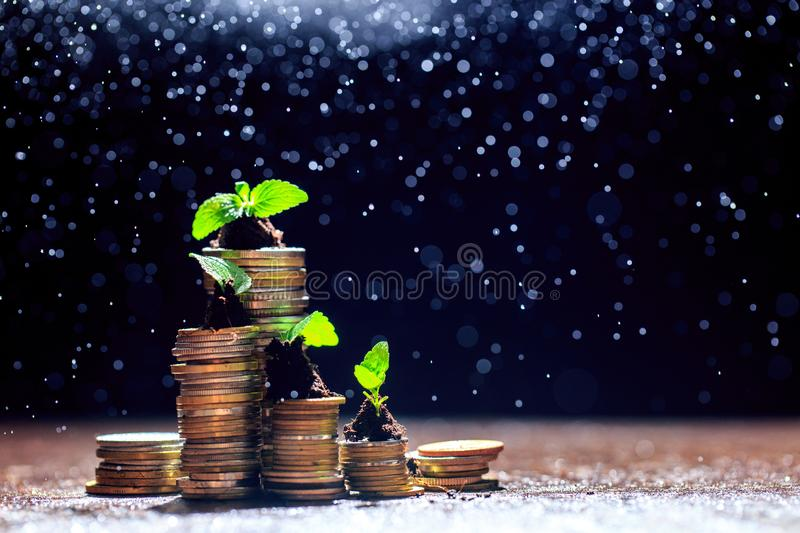 Young plant in soil on the top of coin stack,black background,isolated,investment,business growth concept,copy space. - Image stock photography