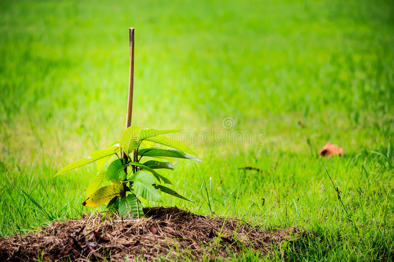 Young plant. View of young plant ready to growing in the park royalty free stock photos