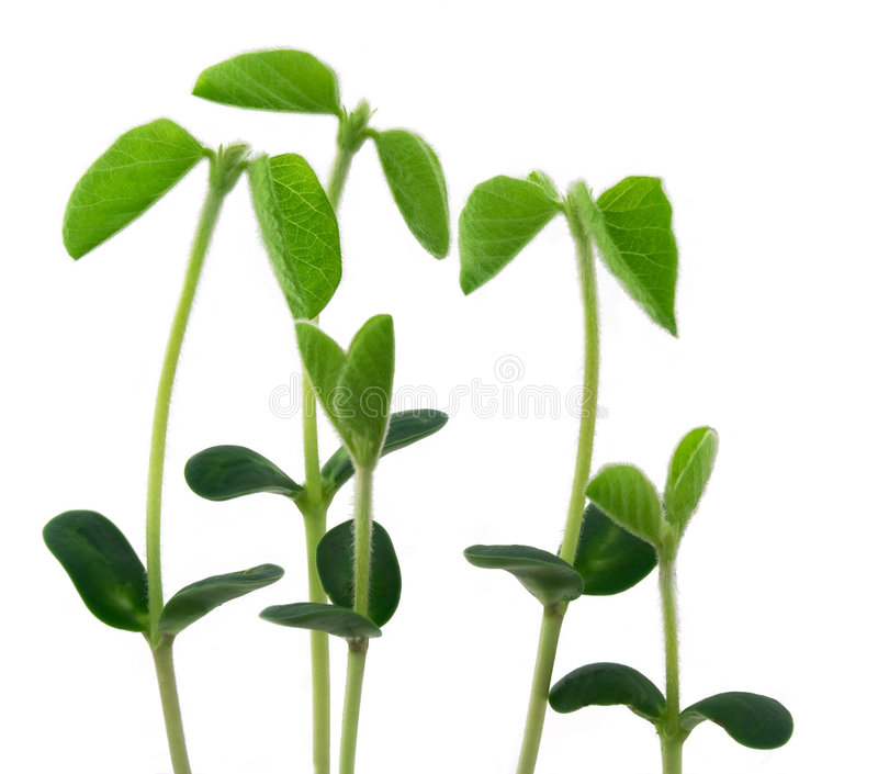 Young plants royalty free stock photography