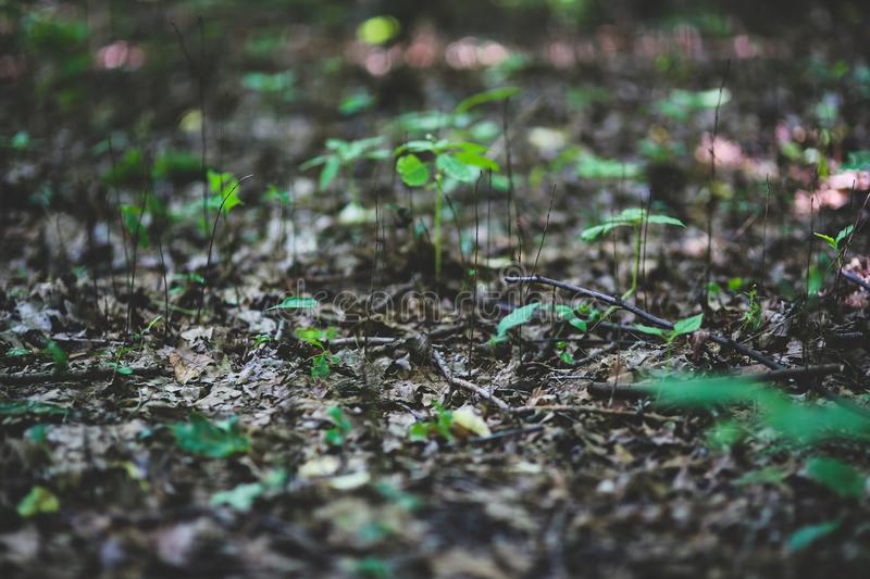 Young plants on litter stock photos