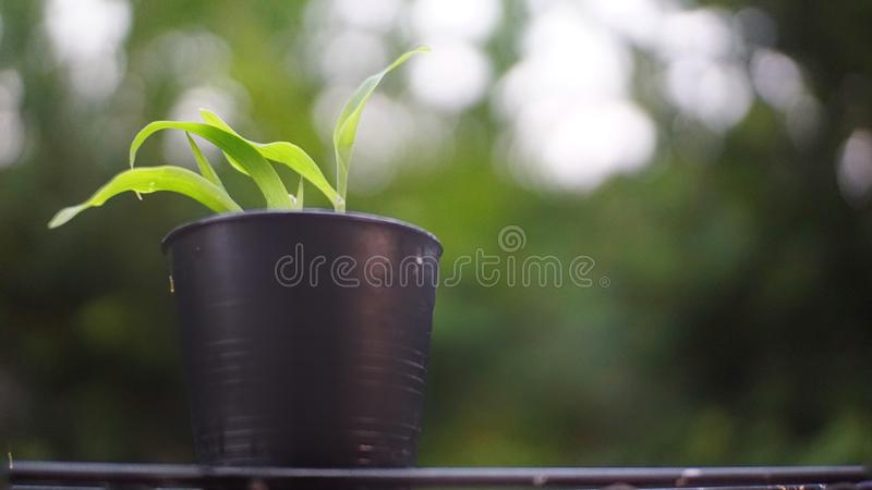 Young plants  in plastic pot stock image