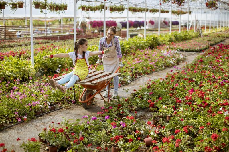 Young playful florist enjoying work while one of them riding in the cart in the greenhouse royalty free stock image