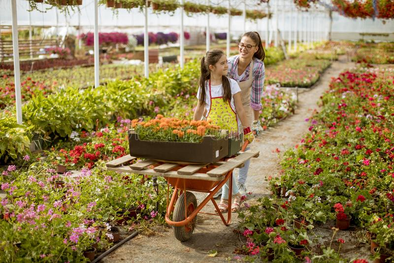 Young playful florist enjoying work while one of them riding in the cart in the greenhouse royalty free stock photography