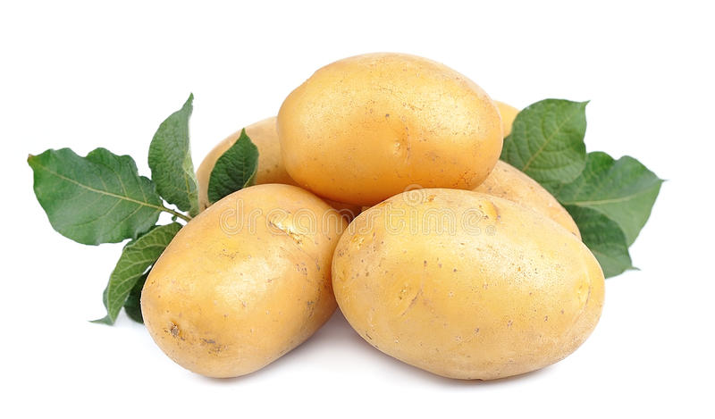 Young potato royalty free stock photography