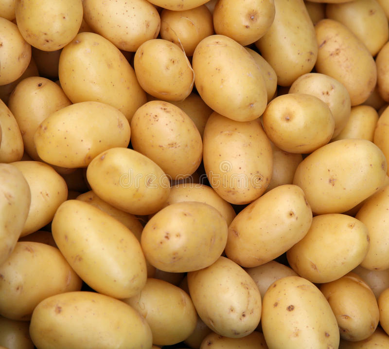 Young potatoes royalty free stock photo