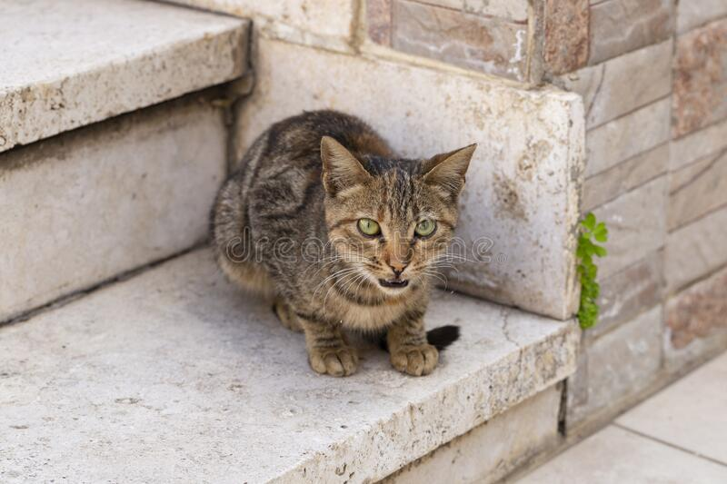 The young predator. Striped cat. The animal is exploring the environment. Fuzzy`s in town royalty free stock photo