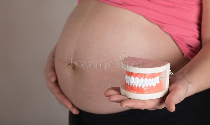 Young pregnant woman keeps plastic model of human jaw. Young pregnant between 30 and 35 years old woman keeps plastic model of human jaw. Closeup stock photography