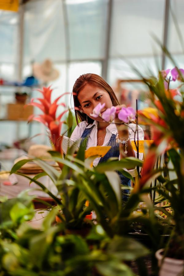 Young pretty Asian woman agronomist with tablet working in greenhouse inspecting the plants.  stock photos