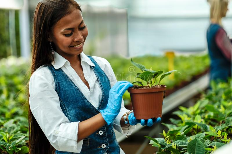 Young pretty Asian woman agronomist with tablet working in greenhouse inspecting the plants.  royalty free stock image