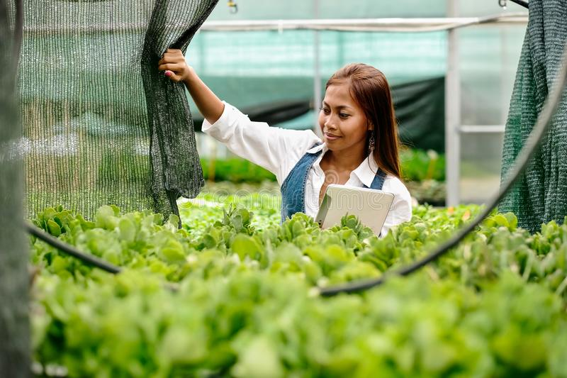 Young pretty Asian woman agronomist with tablet working in greenhouse inspecting the plants stock image