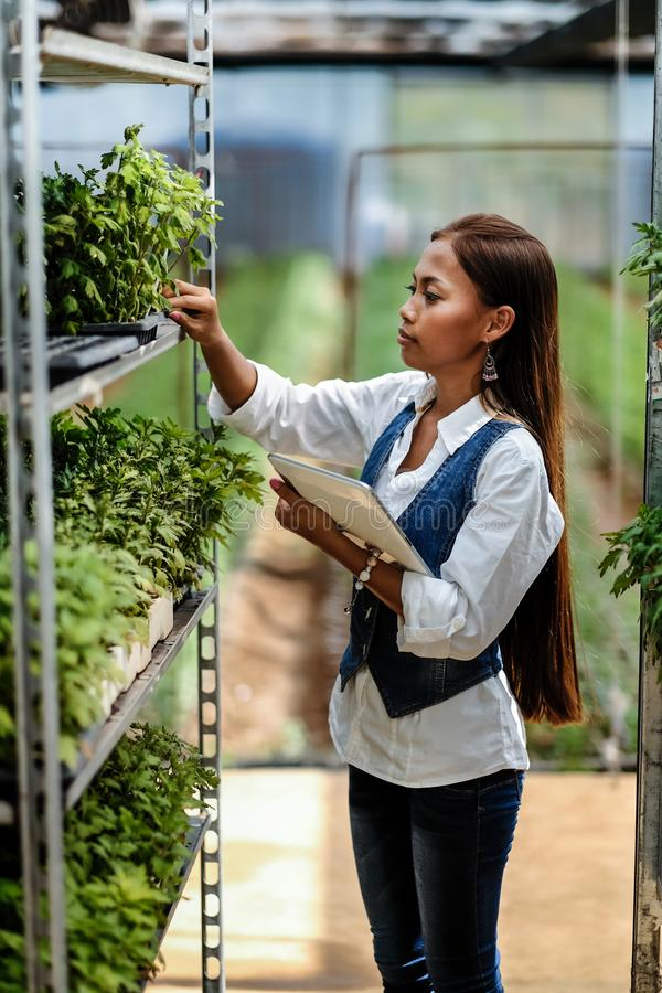 Young pretty Asian woman agronomist with tablet working in greenhouse inspecting the plants.  stock photo