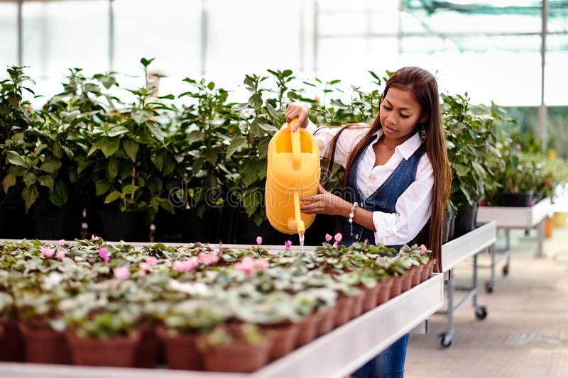 Young pretty Asian woman working in greenhouse watering the plants.  royalty free stock image