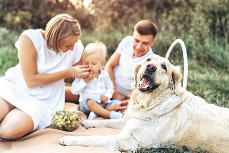Young cute family on picnic with dog. Young pretty family on picnic with dog royalty free stock images